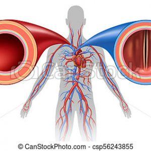Blood Vessel peptide Extract (5 Ampules) 1